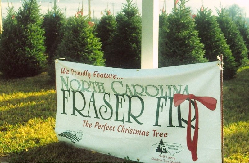 Vestavia family helps others find ideal Christmas trees with family-owned business